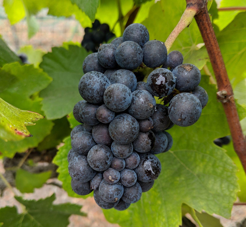 Etnyre Wines